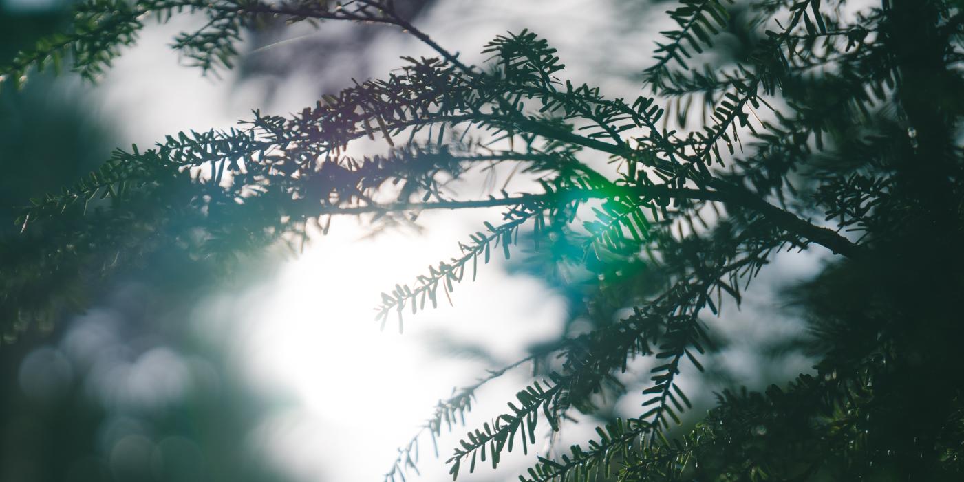 北八ヶ岳 白駒池 白駒荘 公式ホームページ