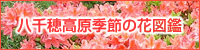 八千穂高原季節の花図鑑